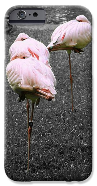 Sleeping Flamingos iPhone Case by Cheryl Young