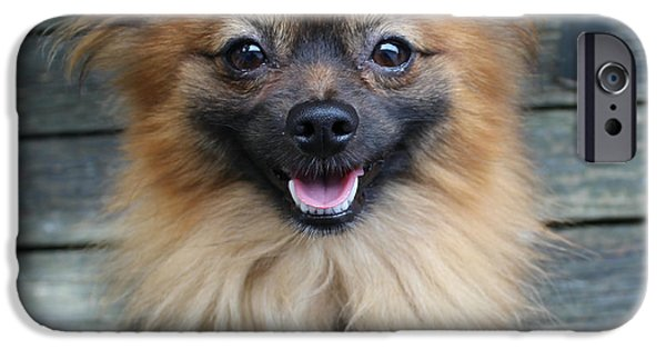 Puppy Love Framed Prints iPhone Cases - Smiling Pomeranian  iPhone Case by Tegan Jarvis