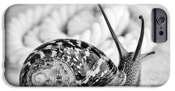 Small iPhone Cases - Snail iPhone Case by Nailia Schwarz