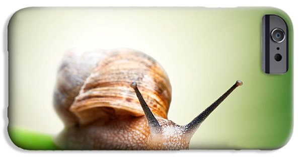 Vanishing iPhone Cases - Snail on green stem iPhone Case by Johan Swanepoel