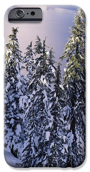 South Rim iPhone Cases - Snow Covered Trees At South Rim, Crater iPhone Case by Panoramic Images