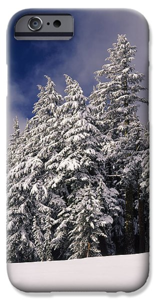 Fir Trees iPhone Cases - Snow Covered Western Hemlock And Fir iPhone Case by Panoramic Images