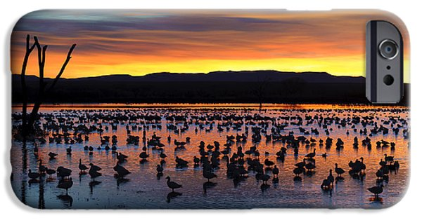 Nature Scene iPhone Cases - Snow Geese In Pond At Sunrise iPhone Case by John Shaw