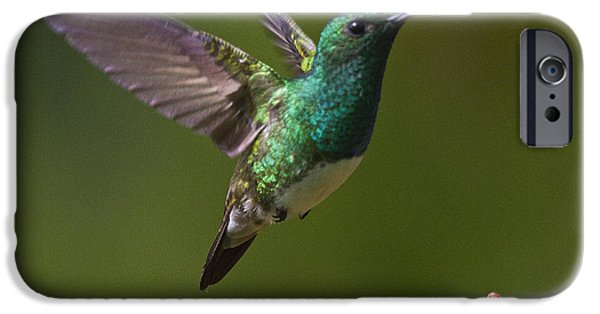 Aviary iPhone Cases - Snowy-bellied Hummingbird iPhone Case by Heiko Koehrer-Wagner