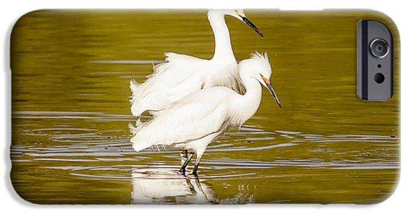 Cabin Window iPhone Cases - Snowy Egrets iPhone Case by Robert Frederick