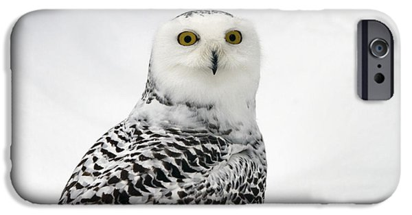 Lilachw iPhone Cases - Snowy Owl Bubo scandiacus iPhone Case by Lilach Weiss