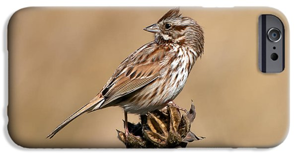 Beauty Mark iPhone Cases - Song Sparrow iPhone Case by Rich Leighton