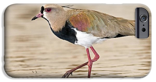 Lapwing iPhone Cases - Southern Lapwing iPhone Case by Tony Camacho