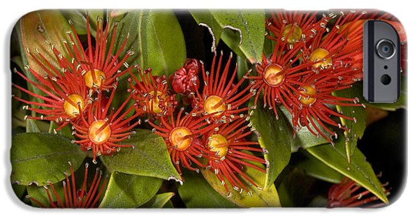 23 iPhone Cases - Southern Rata Metrosideros Umbellata iPhone Case by Bob Gibbons