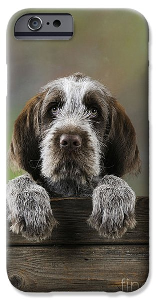 Dog Close-up iPhone Cases - Spinone Puppy Dog iPhone Case by John Daniels