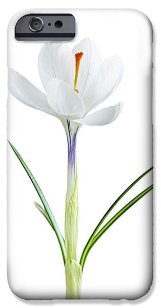 Blossom iPhone Cases - Spring crocus flower iPhone Case by Elena Elisseeva