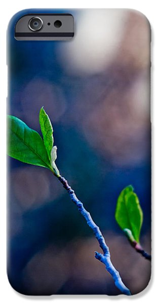Spring in Bloom iPhone Case by Linda Unger