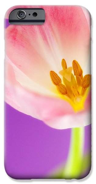 Close Up Floral iPhone Cases - Springtime Tulip iPhone Case by Carol Leigh