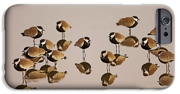 Lapwing iPhone Cases - Spur-winged Lapwing Vanellus spinosus iPhone Case by Eyal Bartov