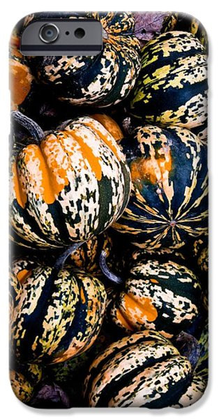 iPhone Cases - Squash 2 iPhone Case by Jamie Holbrook
