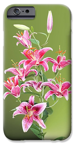 Asiatic Lily iPhone Cases - Stargazer Lilies iPhone Case by Kristin Elmquist