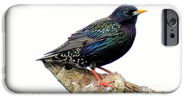 Cut-outs Mixed Media iPhone Cases - Starling iPhone Case by Toppart Sweden