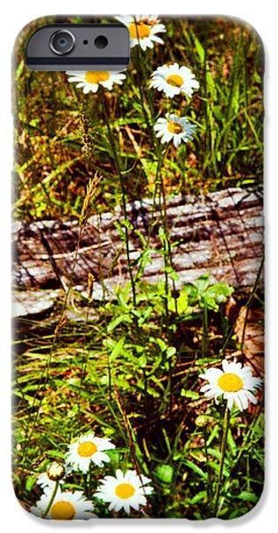 Summer Flowers on the Blue Ridge Parkway 7653 iPhone Case by Dan Carmichael