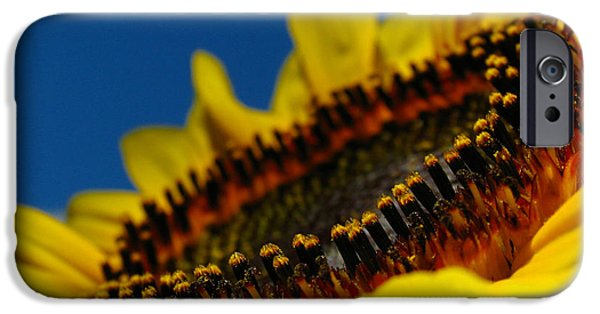 Nature Divine iPhone Cases - Sunflower Macro iPhone Case by Juergen Roth