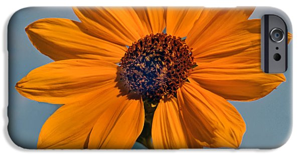 Haybale iPhone Cases - Sunflower iPhone Case by Robert Bales