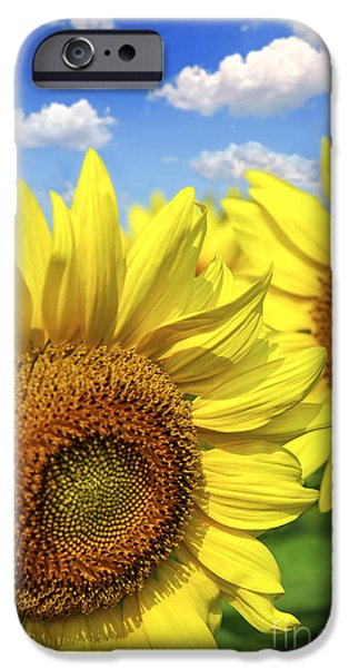 Sunflowers Photographs iPhone Cases - Sunflowers iPhone Case by Elena Elisseeva