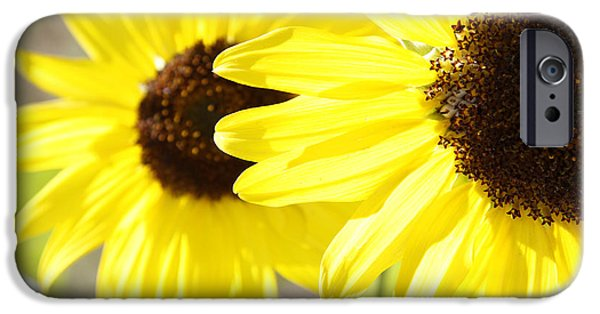 Bloom iPhone Cases - Sunflowers  iPhone Case by Les Cunliffe