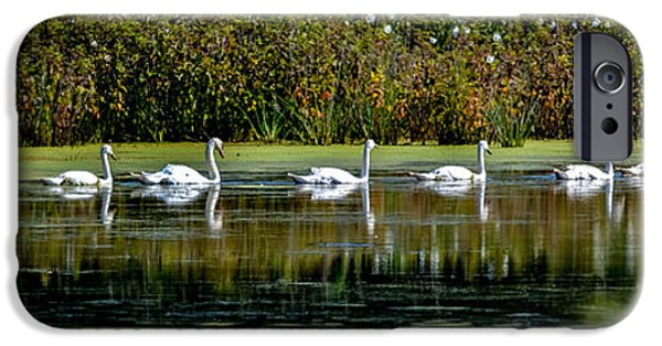 Swans... iPhone Cases - Swan Lake iPhone Case by Michael Brooks