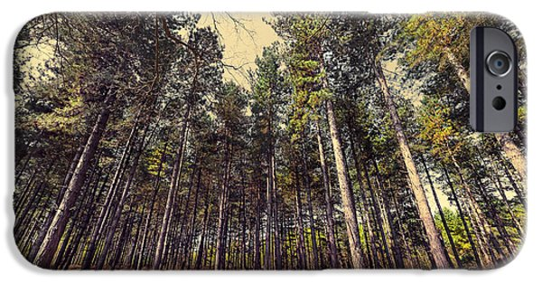 Creek Mixed Media iPhone Cases - Tall Trees iPhone Case by Svetlana Sewell