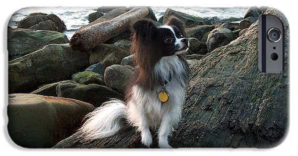 Japanese Chin Puppy iPhone Cases - Tamahome at Sunset iPhone Case by Christine Klunder