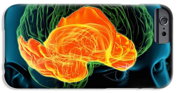 Meanings. Humans iPhone Cases - Temporal Lobes In The Brain, Artwork iPhone Case by Roger Harris