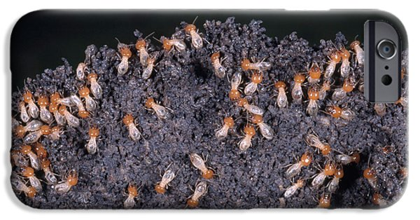 Mounds iPhone Cases - Termites Rebuilding Mound iPhone Case by Gregory G. Dimijian, M.D.
