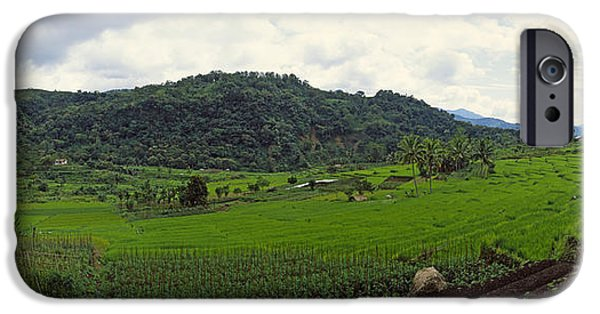 Mountain iPhone Cases - Terraced Rice Field, Flores Island iPhone Case by Panoramic Images