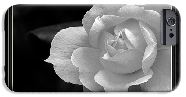 Matting iPhone Cases - The Exquisiteness Of A Rose  iPhone Case by Charles Feagans