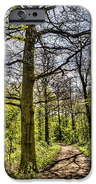The Forest Path iPhone Case by David Pyatt