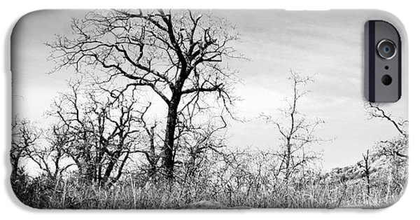 Tree Art Print iPhone Cases - Three of a Kind iPhone Case by Mickey Harkins