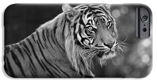Bobcat And Kittens iPhone Cases - Tiger Relaxing iPhone Case by Athena Mckinzie