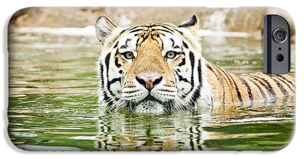 The Tiger iPhone Cases - Top Cat iPhone Case by Scott Pellegrin
