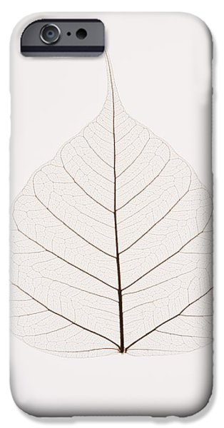 Cut-outs iPhone Cases - Transparent Leaf iPhone Case by Kelly Redinger
