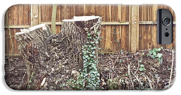 Bark iPhone Cases - Tree stump iPhone Case by Tom Gowanlock