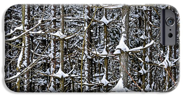 Park Scene iPhone Cases - Tree trunks in winter iPhone Case by Elena Elisseeva