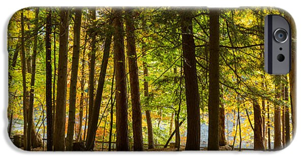 States iPhone Cases - Trees In A Forest, Letchworth State iPhone Case by Panoramic Images
