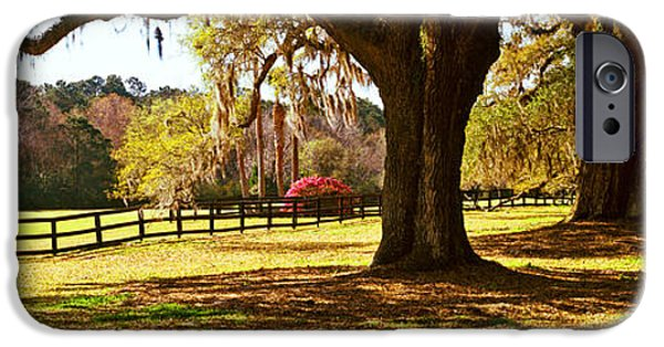 Garden Scene iPhone Cases - Trees In A Garden, Boone Hall iPhone Case by Panoramic Images