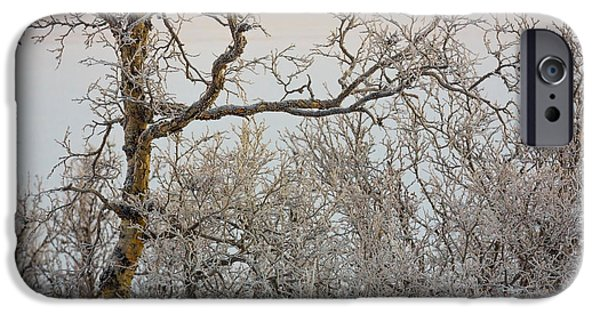 Lapland iPhone Cases - Trees In The Frozen Landscape, Cold iPhone Case by Panoramic Images