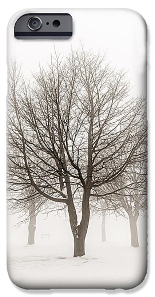 Snow Scene Landscape iPhone Cases - Trees in winter fog iPhone Case by Elena Elisseeva