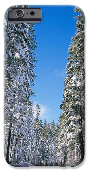 Tall Trees iPhone Cases - Trees On Both Sides Of A Snow Covered iPhone Case by Panoramic Images