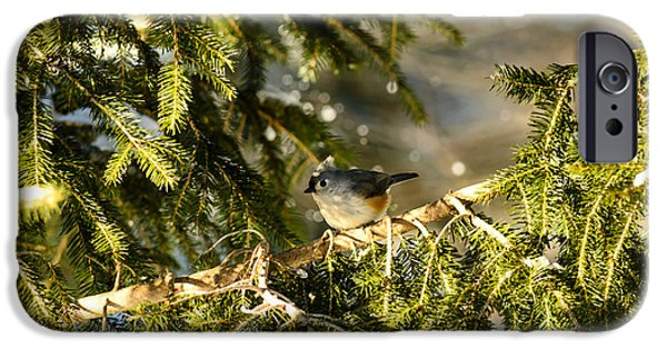 Tufted Titmouse iPhone Cases - Tufted Titmouse iPhone Case by Thomas R Fletcher