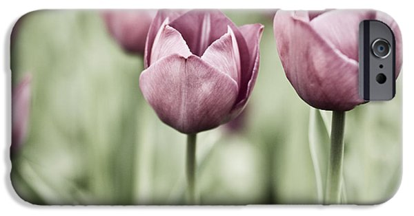 Floral Photographs iPhone Cases - Tulip Garden iPhone Case by Frank Tschakert