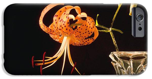Lilium iPhone Cases - Turks-Cap lilly Lilium Superbum iPhone Case by Keith Webber Jr