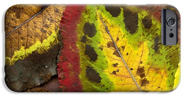 Turning Leaves iPhone Cases - Turning Leaves iPhone Case by Stephen Anderson
