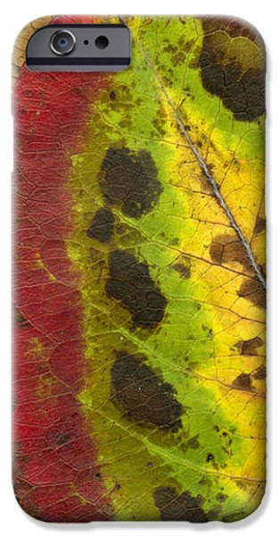 Turning Leaves iPhone Case by Stephen Anderson